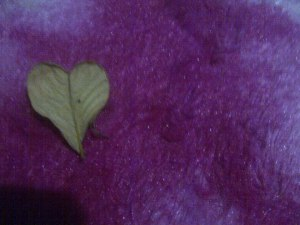 "And while I was gardening, I found this heart shaped leaf. - ""Life (GOD) is full of surprises!"""