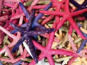 Dried starfish...