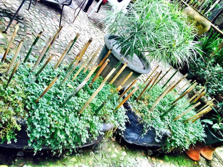 greens tesoros