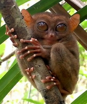 Source: www.explorerphilippines.com